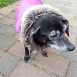 Baninana_hpetstore_Hundeparka (1)