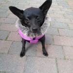 Baninana_hpetstore_Hundeparka (12)