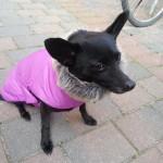 Baninana_hpetstore_Hundeparka (13)