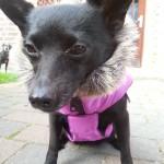 Baninana_hpetstore_Hundeparka (15)
