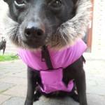 Baninana_hpetstore_Hundeparka (16)