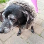 Baninana_hpetstore_Hundeparka (2)