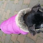Baninana_hpetstore_Hundeparka (3)