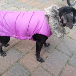 Baninana_hpetstore_Hundeparka (4)