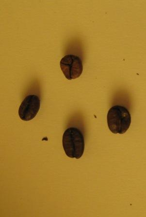 Produkttest Kaffee – Espressos